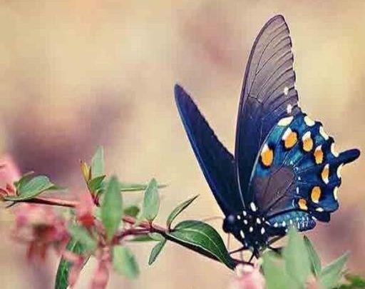 صور فراشات خلفيات فراشات ملونة جميلة جدا Butterfly Pictures Beautiful Butterflies Beautiful Birds