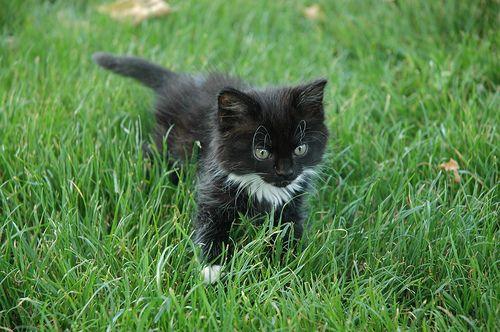 Kitten exploring by Rosedale Annie, via Flickr