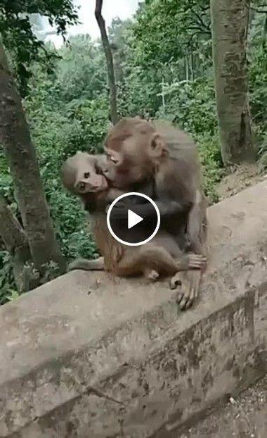 Macaco querendo pegar mulher do outro.