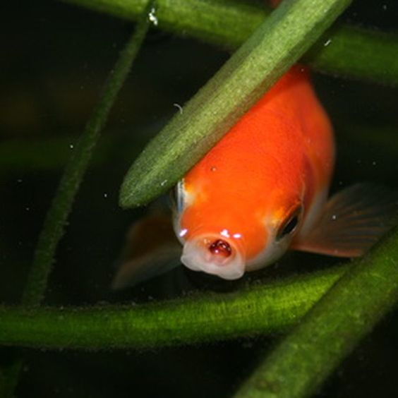 How to care for an outside goldfish pond goldfish for Outdoor goldfish pond