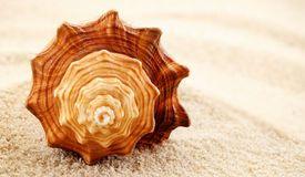 Spiral seashell. Royalty Free Stock Image #marine #seashell