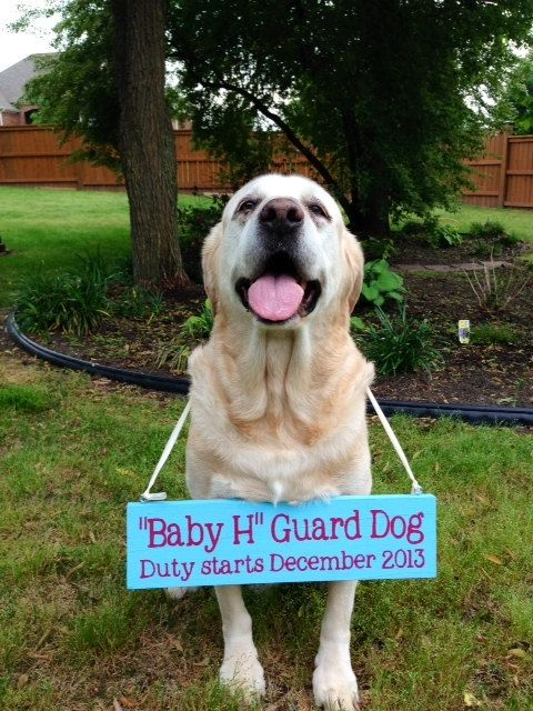 Oh my word! That is one of the cutest pregnancy announcements I've seen!