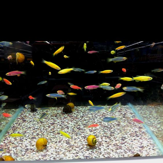 At walmart walmart and colorful fish on pinterest for Fish scale walmart