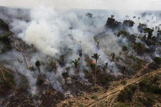 Destruction of the rain forest