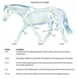 Acupressure Points to Help Your Horse Adapt to Change