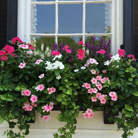 If you are mounting your window box under a shady window, you can pot up with shade-loving plants.