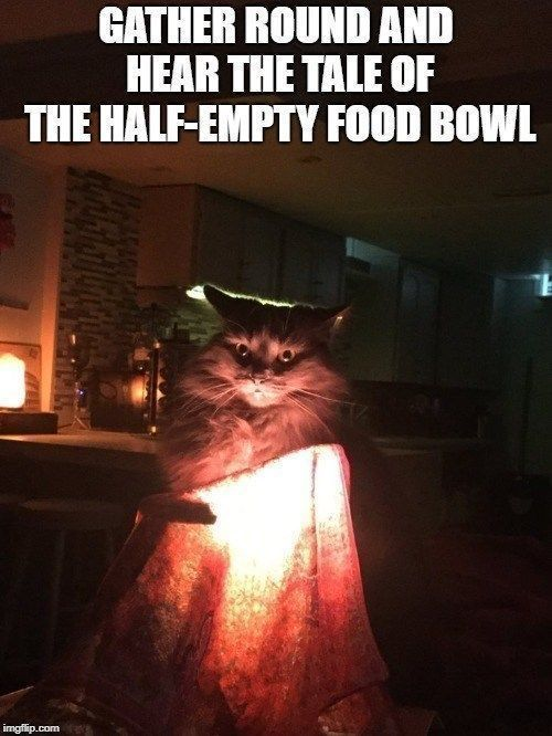 30 Funny Cat Memes That Will Make You Laughing So Hard Funny Cat Memes Cat And Dog Memes Cat Quotes Funny