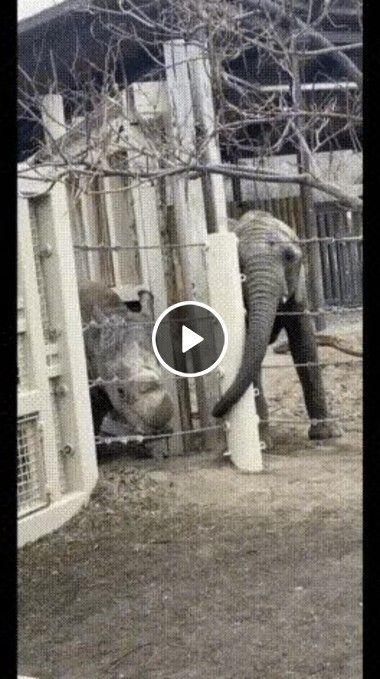 Animais querendo dar uma voltinha