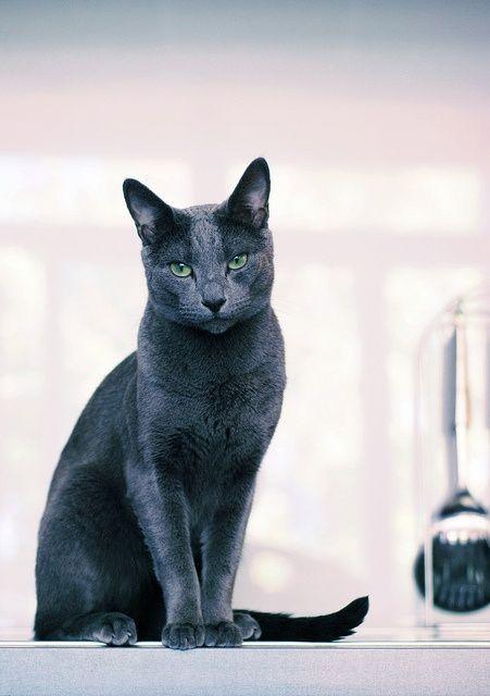 http://pinterest.com/maryannrizzo/kitty-cats/