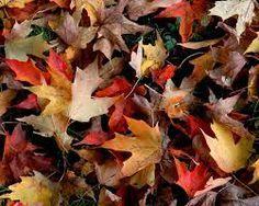 Folhas secas de inverno