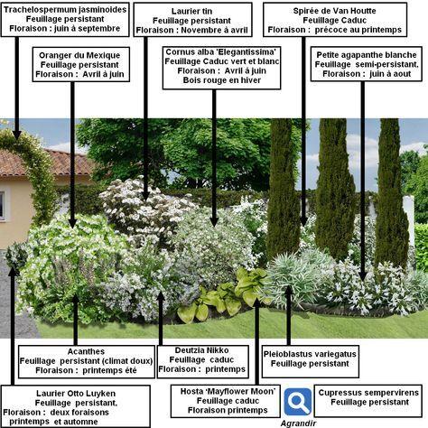 48++ Arbuste persistant petit jardin ideas