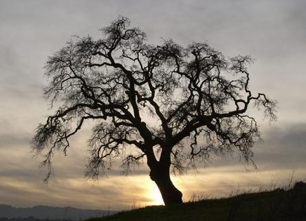 árvore no inverno