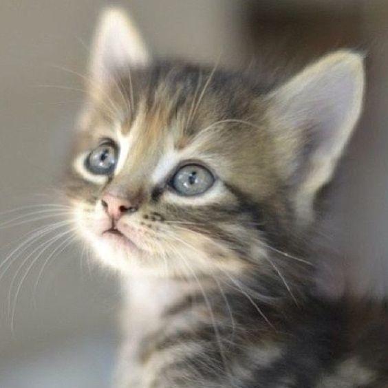 Los cachorros de toda especie son hermosos.. incluso los cachorros humanos, pero mis favoritos son los cachorros de gato!