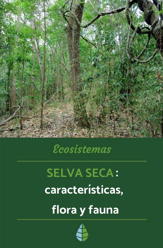 Selva Seca Características Flora Y Fauna Ecosistema Selva Ecosistemas Fauna De La Selva