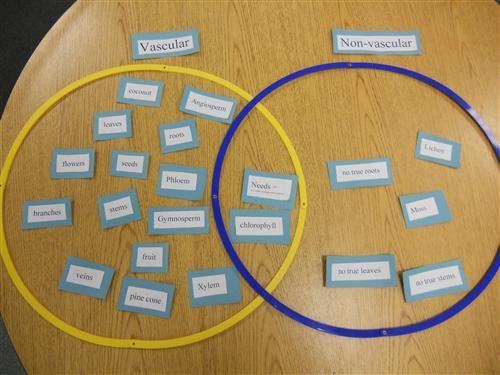 Vascular and Non Vascular Plants Chart | 5th Grade - Vascular vs ...
