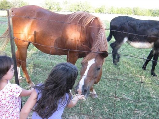 Waits Farm Retreat is on a 45-acre working farm in Dime Box, TX. The farm has an cattle operation with the major focus on vegetable gardens, fruit orchards, berry patch, grapes, antique roses and an herb garden.