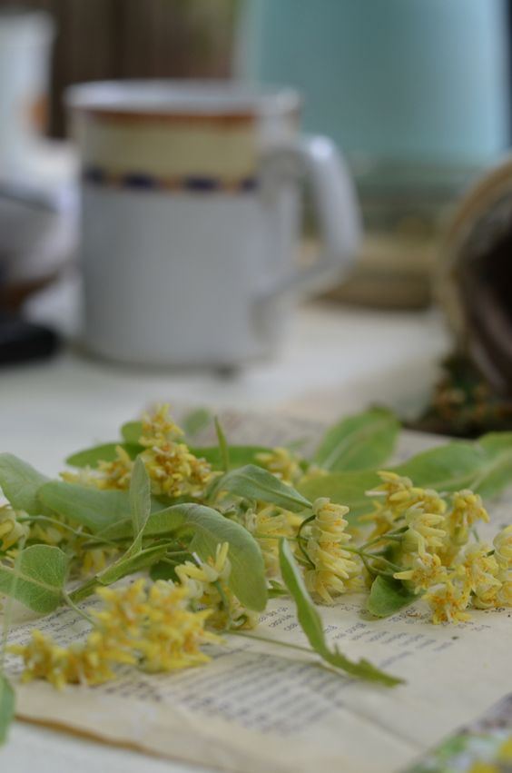 Linden flowers tea.