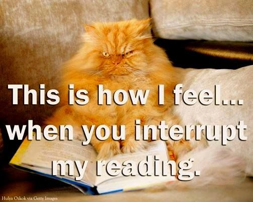 YES!  Can't you see I am READING!: