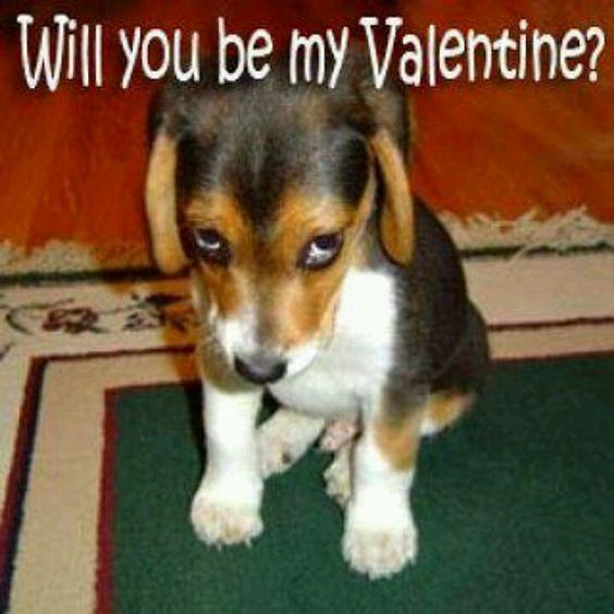 So darn cute