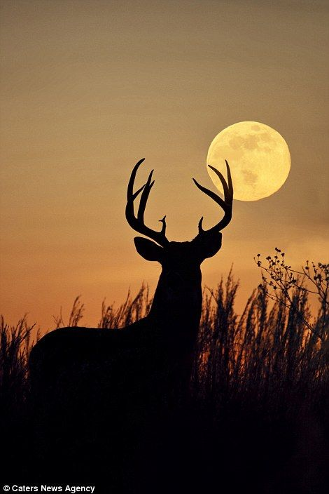 Photographers capture striking silhouettes of animals against sensational skies  | Daily Mail Online