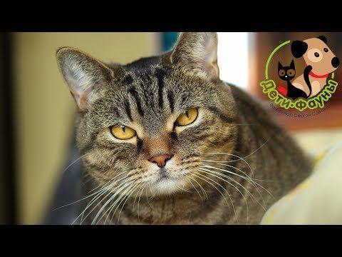 коронавирусная инфекция кошек Youtube животные