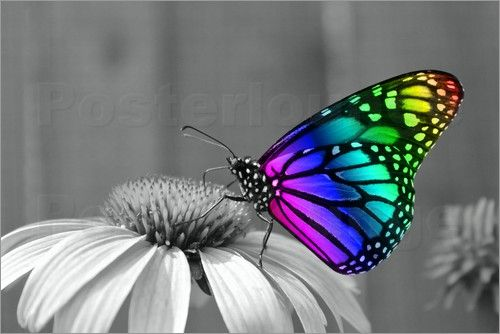 Wonderful Dream Picture - Künstlerischer Schmetterling