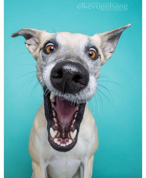 Elke Vogelsang dog photography  Portraits of expressive dogs