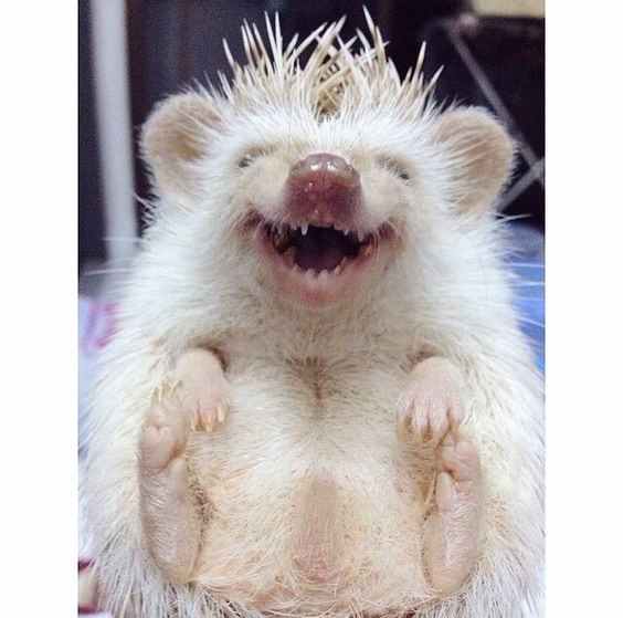 What a happy little hedgehog