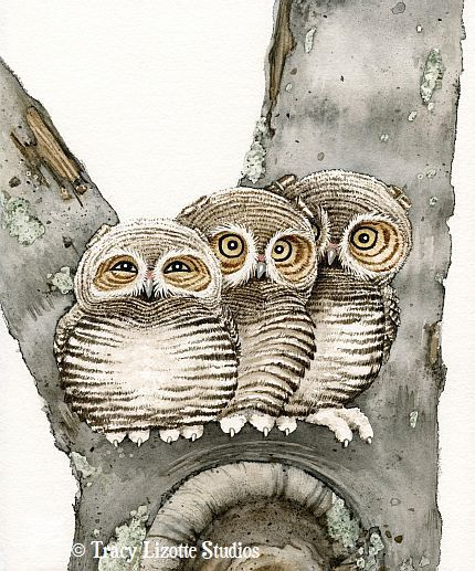 Three Small Owls  8x10 archival watercolor by TracyLizotteStudios, $20.00: