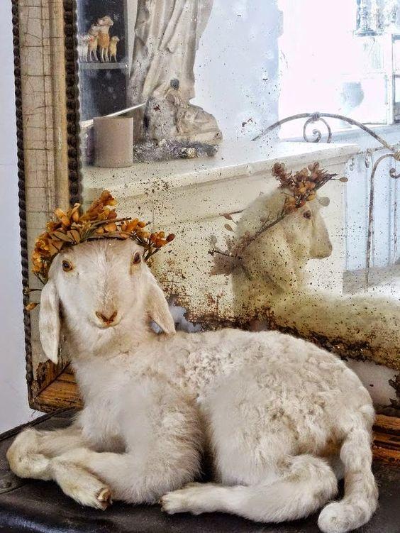 happy new year | sheep
