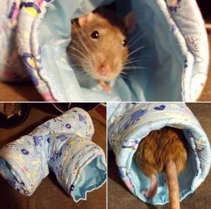 Toys Igotrats Pet Rats Cute Rats Pet Supplies Plus