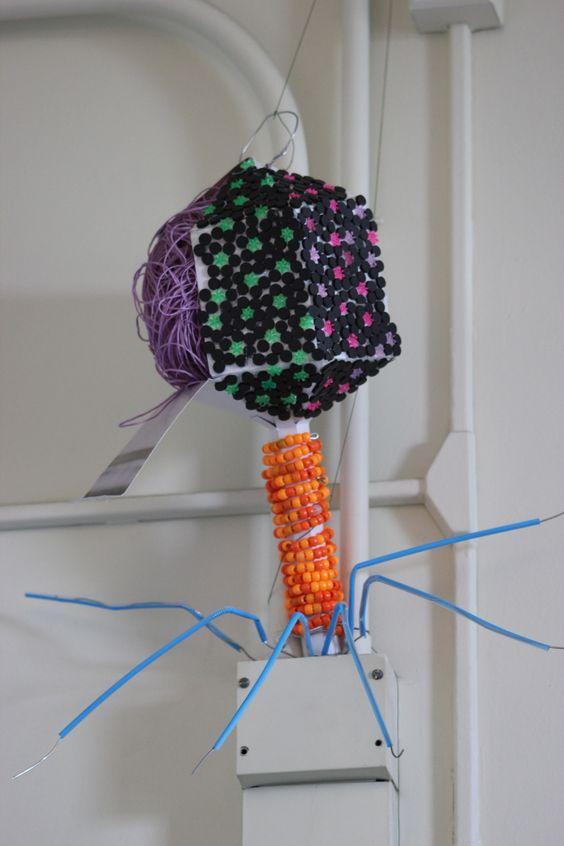 Bacteriophage Model: