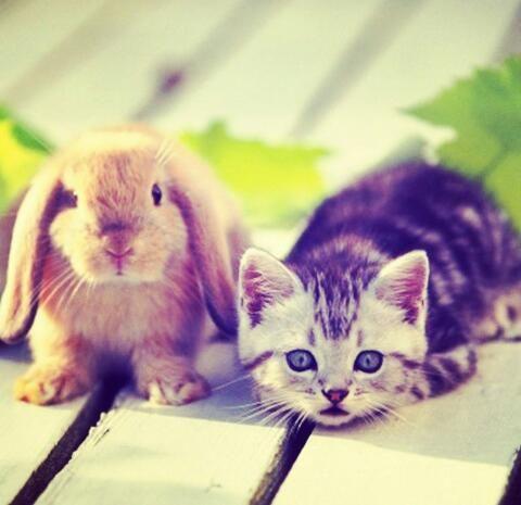 #Kätzchen #Hase