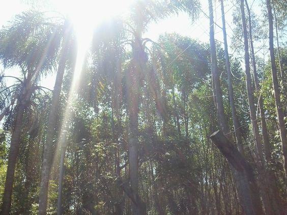 sol e coqueiros