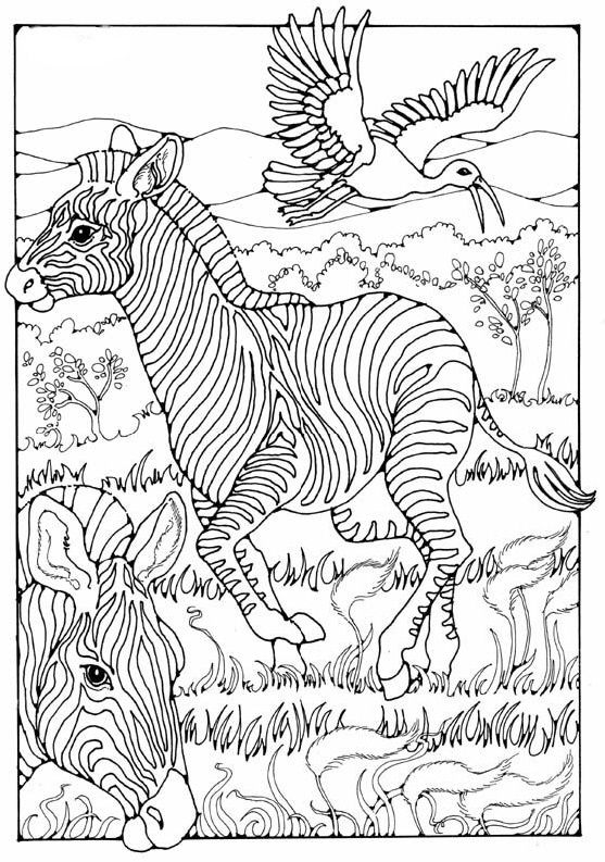 Pin By Bsow On Coloring Equids Coloring Pages For Grown Ups Animal Coloring Pages Colouring Pages