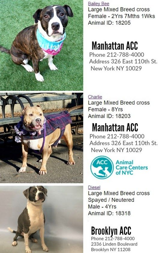 Sign In Large Dog Breeds Dog Adoption Cute Animal Photos