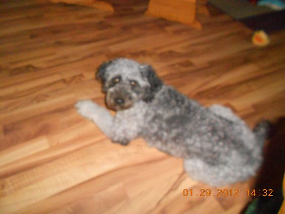 Hallie... Mimi's Arch Nemesis