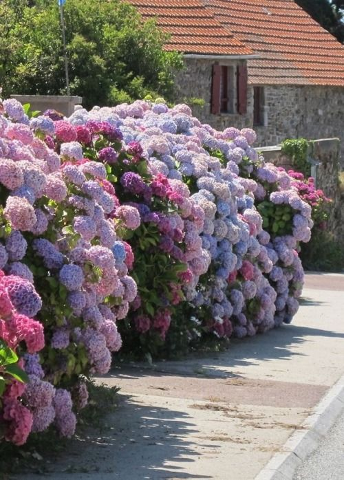 There Is Something About Lilac Hydrangea Garden Garden Care Purple Garden