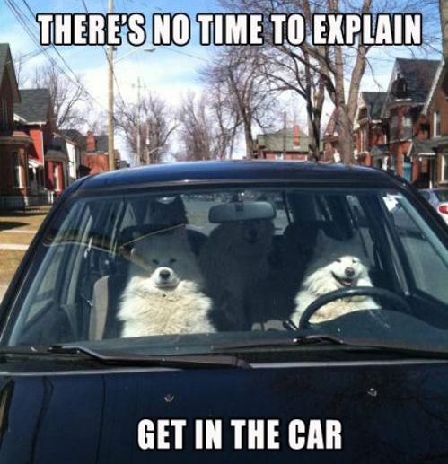 There's no time to explain! Get in the car!  not as good as the lama, still the best