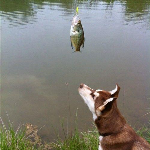 time to take ginger fishing