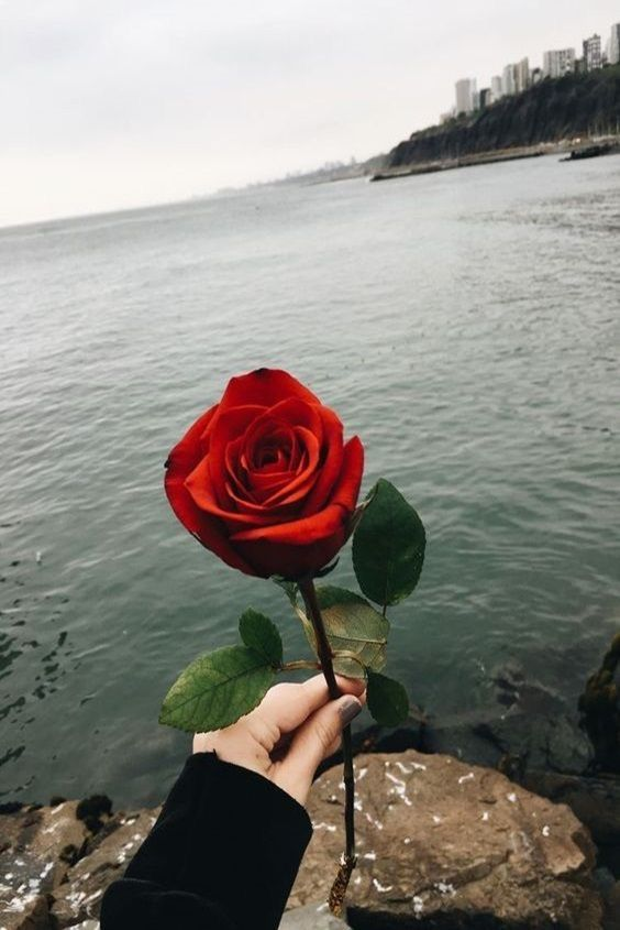 This Rose I M Giving To You Rose Tumblr Rose Wallpaper