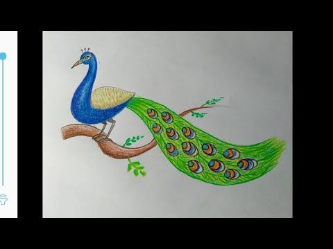 How To Make Peacock Sitting On The Branch Easy Steps Easy Peacock Drawing Realistic Peacock Youtube In 2020 Peacock Drawing Bird Drawing For Kids Bird Drawings