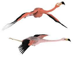 flying flamingos - Google Search
