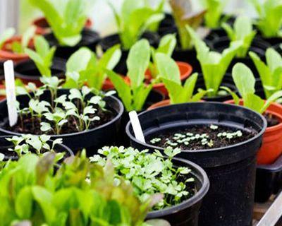 ¡Prueba tu toque verde y prepara hortalizas en tu jardín!