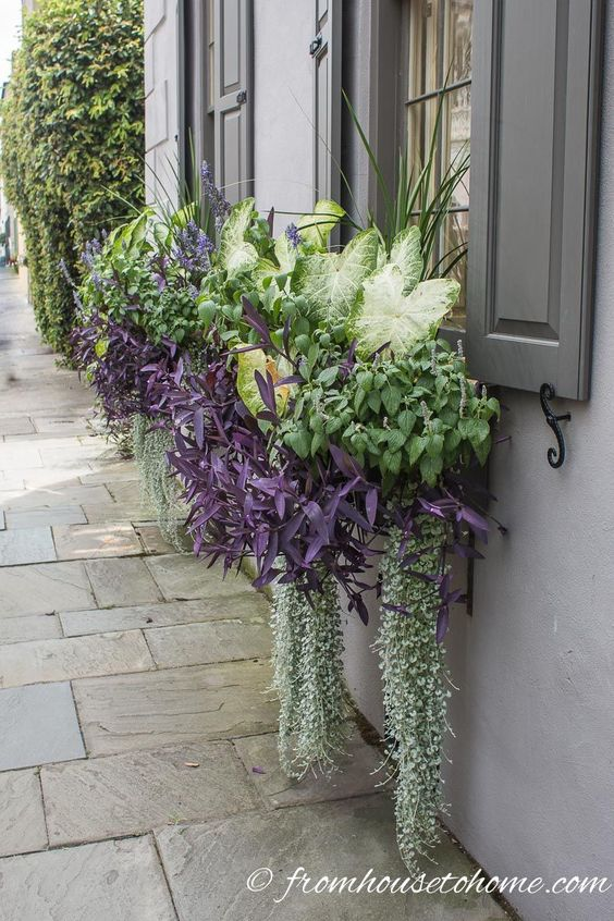 Gorgeous window boxes for the shade with Caladium. Click through to find more flower box ideas. #fromhousetohome #flowerboxes #gardeningtips #gardenideas #containers #windowboxes #shadegarden