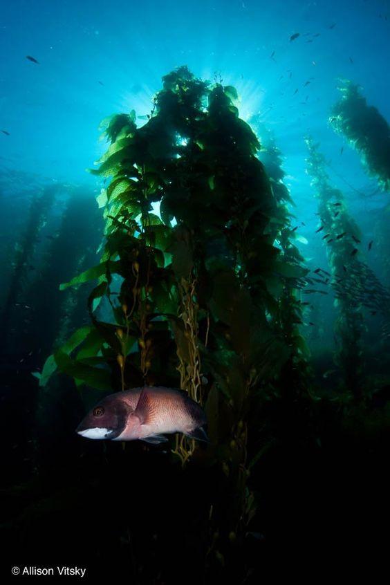 San Diego Dives