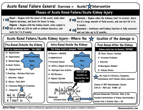 This is part of my Renal Unit in the nurses notes to explain the process of the what is the main focus of my teaching in the classroom Acute Renal Failue Pre Renal Intrarenal PostRenal Failure GFR BUN Creatinine Interventions Nursing Nurses Electrolytes Labs Lab Values Nursing Student
