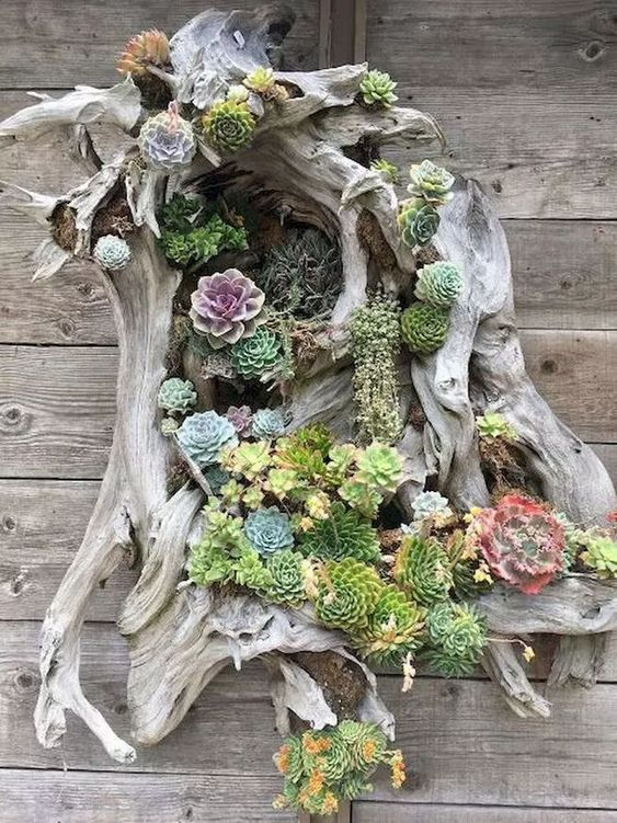 drifted wood attached on the wall and planted with succulents #gardenIdeas #garden #gardening #plants #homeDecor #indoor
