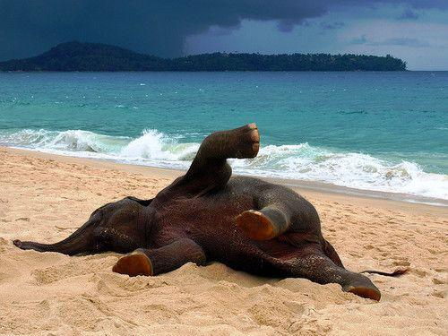 elephant on the beach