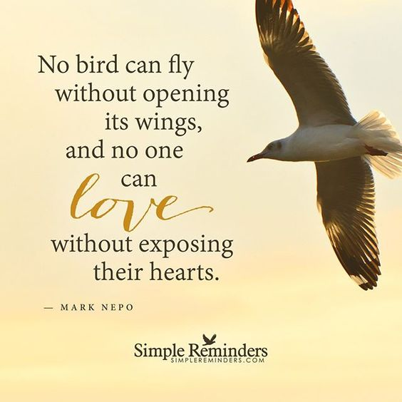 """No bird can fly without opening its wings, and no one can love without exposing their hearts."" -Mark Nepo #SimpleReminders #SRN @bryantmcgill @jenniyoung_ #quote #bird #fly #success #heart #love"